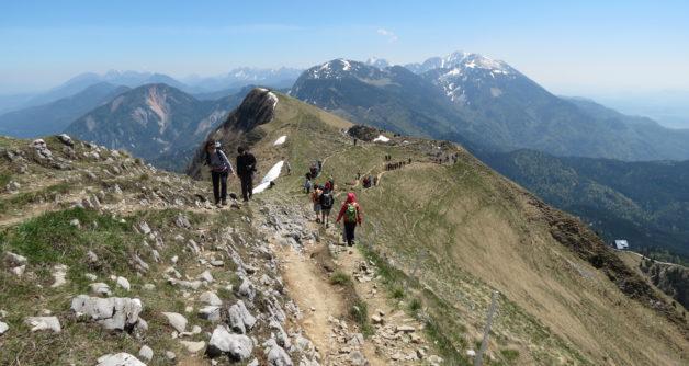 Planinski izlet na Golico – v kraljestvu narcis
